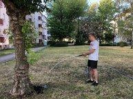 Bewässerung der Bäume