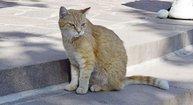Tierpatenschaft für Garfield